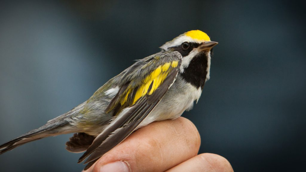 Your Own Singing Bird